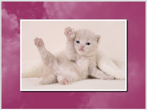 *** CHATS ET CHATONS ***